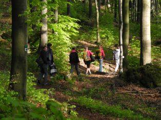 Frankenjura forest.JPG